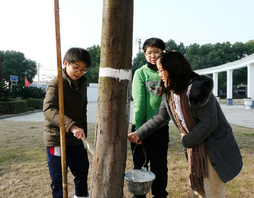 给树干刷上石灰水