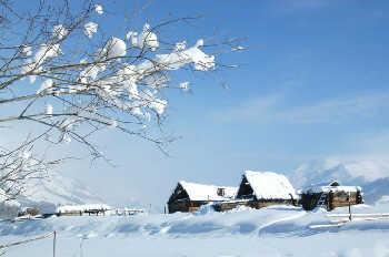 哈纳斯之冬