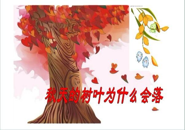 秋天的树叶为什么会落