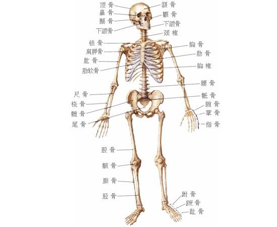 黑板上的解剖图